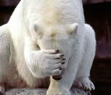 facepalm_bear.jpg